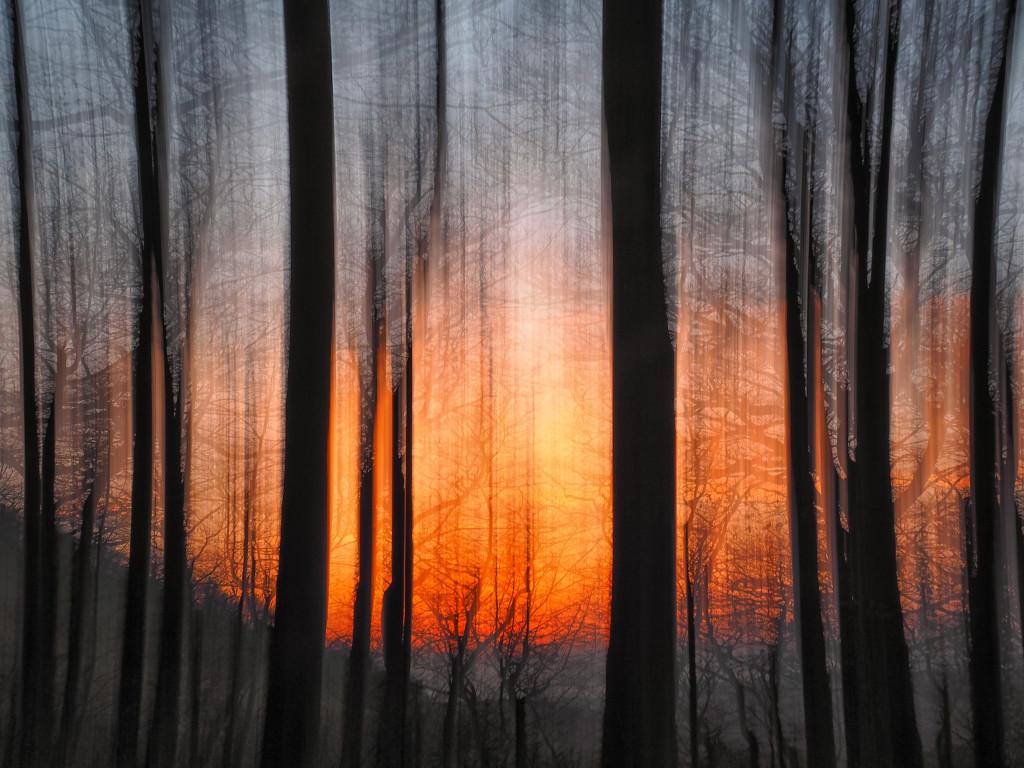 Forrest burning