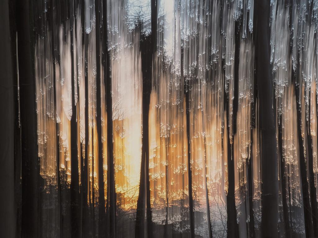 Forrest burning 2