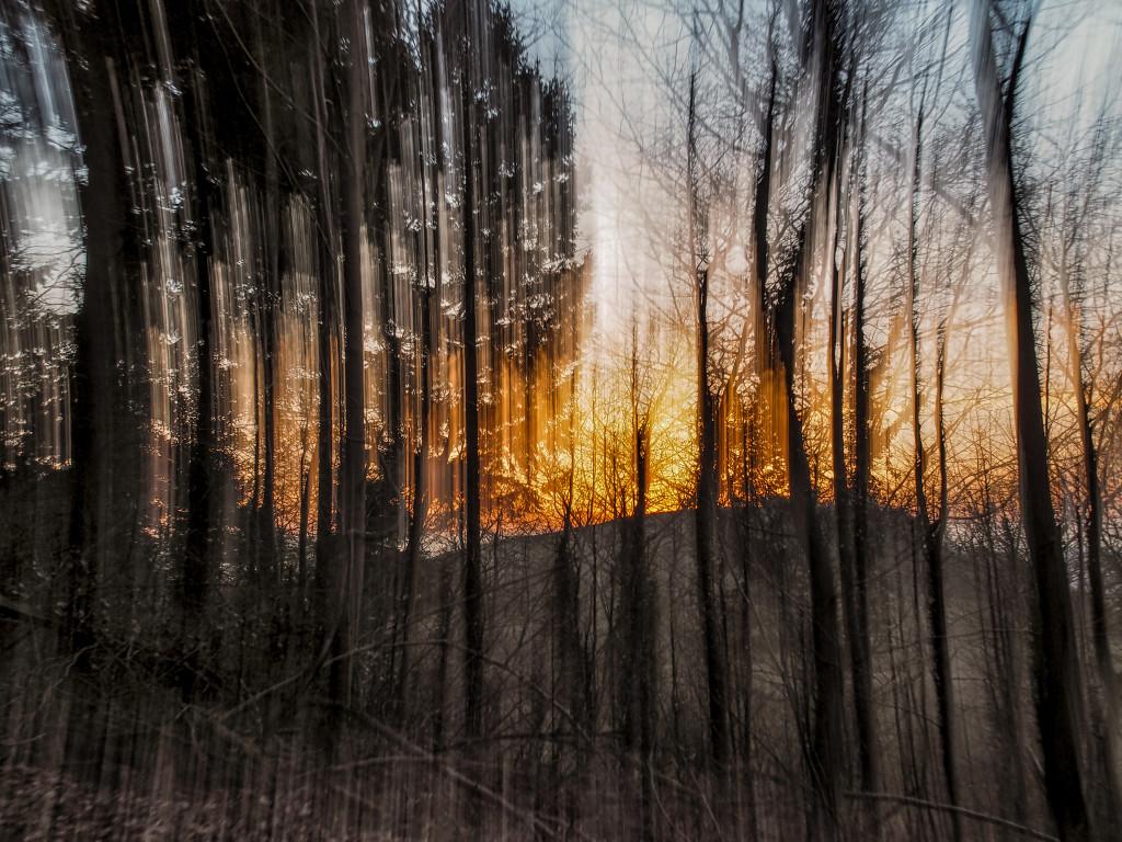 Forrest burning 3