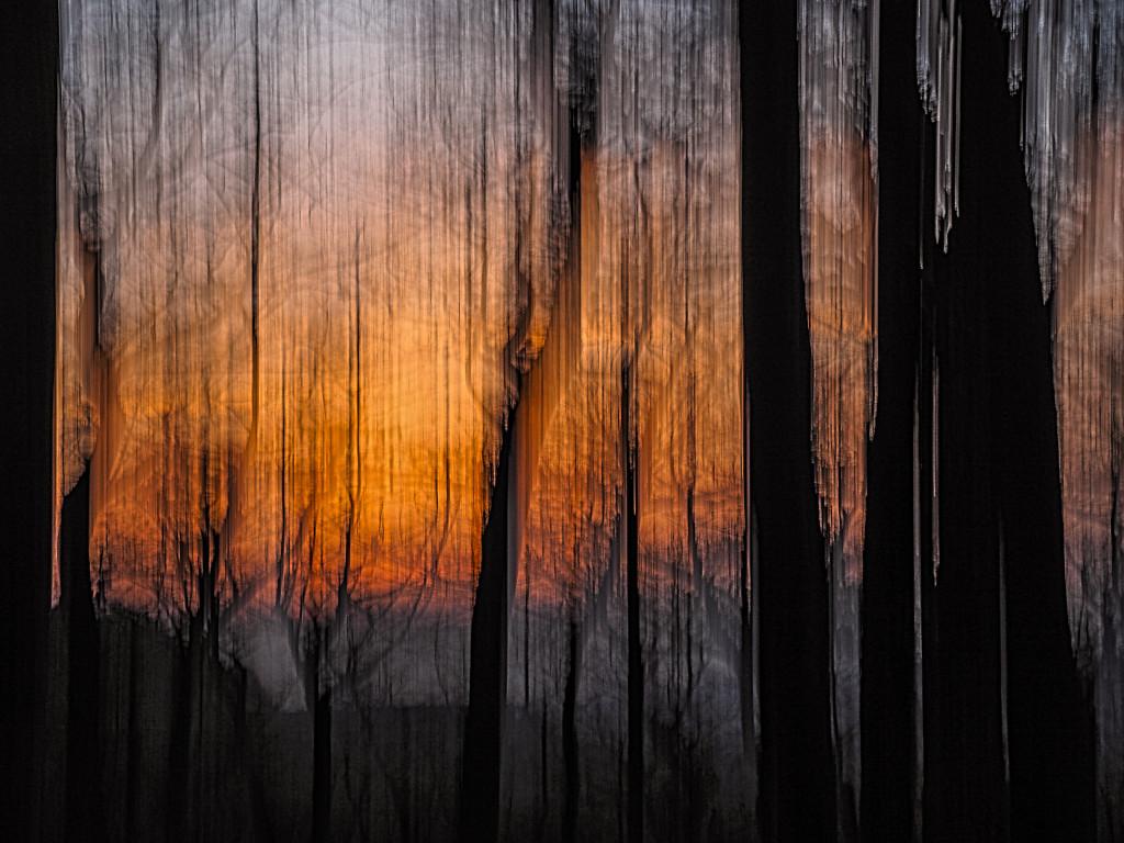 Forrest burning 5