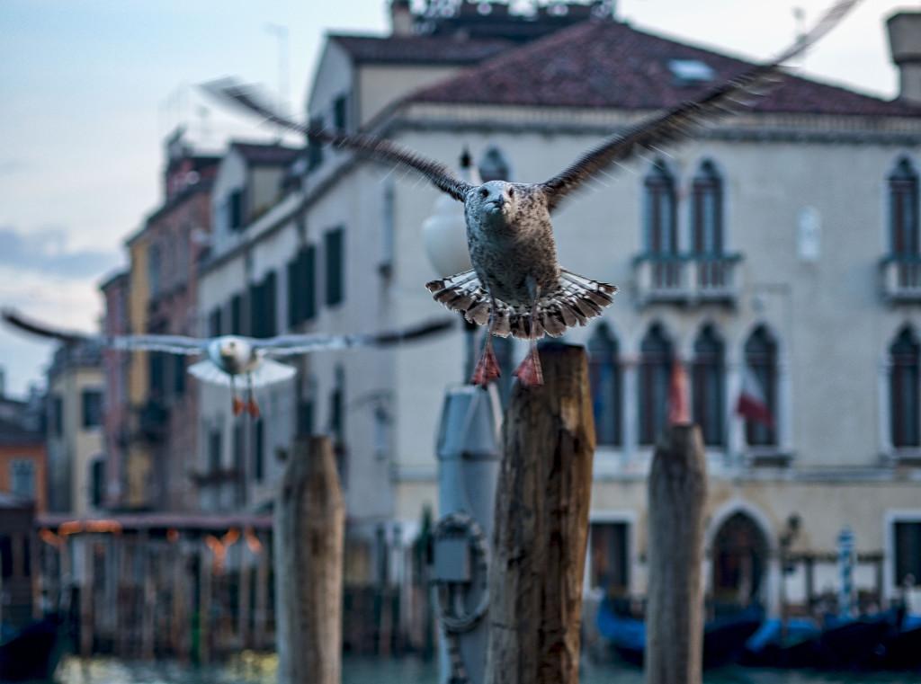 Venezia d´inverno 4